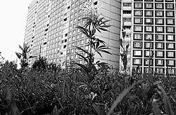 Смертельно опасные наркотики выращивают на городских клумбах