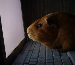 Пощупай пульс своему блогу