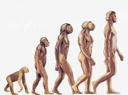 """В генах живого организма \""""записана\"""" его эволюционная история"""