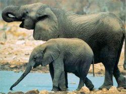 Туристка подцепила чесотку от слона