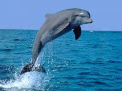 Дельфины переселились из-за глобального потепления