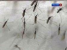 Францию атакуют тигровые комары