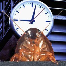 Тараканы и люди по утрам мыслят одинаково