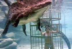Дайвинг с 14-метровыми крокодилами (фото)