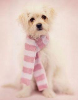 Портреты собак от Rachel Hale (фото)