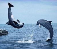 В Балтийском море обнаружены дельфины