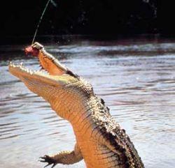 Доказано, что крокодилы действительно плачут во время приема пищи