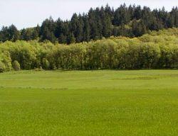 Земельный налог: сколько и за что платит собственник