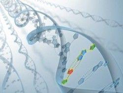 Ученые раскрыли секрет генов долгожителей