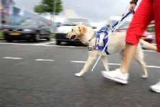 Экологичные автомобили опасны для слепых