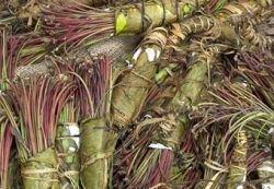 В Сомали угнали самолет с наркотическими листьями