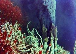 У побережья США обнаружены тысячи новых видов микроорганизмов