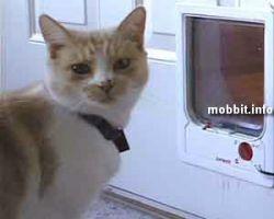 Удивительное изобретение для воспитания кошек