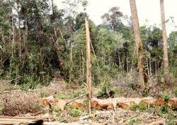 В Индонезии за один день посадят 79 миллионов деревьев