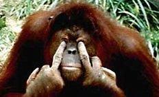 Орангутанги общаются, используя шарады
