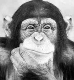 Шимпанзе чуждо чувство справедливости