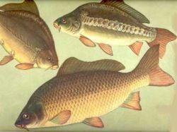 Британцы отучат выходцев из Восточной Европы ловить рыбу и превышать скорость
