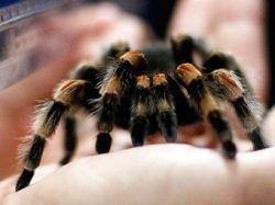 Тысячи пауков напали на город в Индии