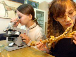 Старшеклассники останутся без физики, химии и биологии