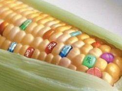 ВТО  подсадит  Россию на ГМО?