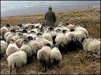 Путин сделал чабана Бабу-Доржо Героем России за героизм при спасении овец