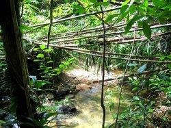 3-летний ребенок сумел выжить в джунглях Амазонки