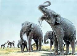 На островах Средиземноморья обитали карликовые слоны