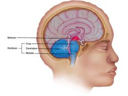Структура мозга расскажет о характере человека