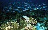 В Малайзии создадут искусственные рифы из конфискованных лодок