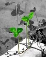 Растения формируют коммуникационные сети