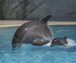 Потрясающие фотографии родов дельфина (фото)