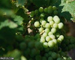 Молдавия будет поставлять в Россию только лучшие вина
