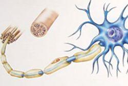 Новое лекарство способно восстанавливать нервные волокна