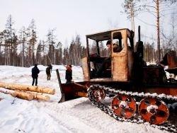 Китайцы в Сибири: грабят, еще и гадят