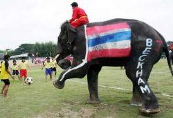 Слоны – средство передвижения для тайских футболистов (фото)