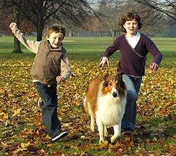 Породистые собаки перестали пользоваться популярностью