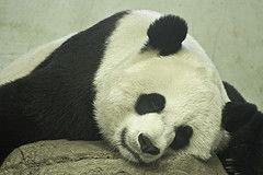Рекомендации для здорового сна