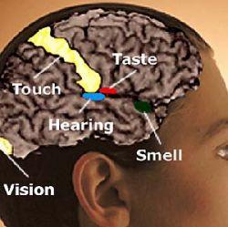 Активность мозга подвергается магнитной стимуляции