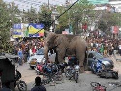 В Индии дикий слон разгромил улицы города