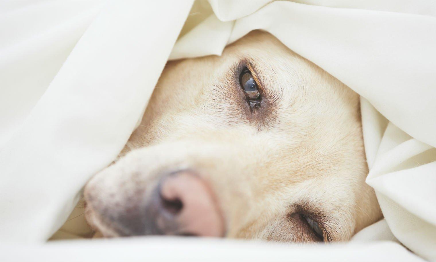 Диета собаке при панкреатите - лечебный корм, питание