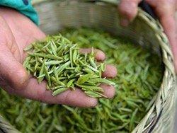 Названа главная польза зеленого чая