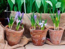 Ученые: комнатные растения влияют на иммунную систему