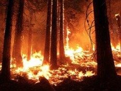 В Калифорнии бушуют лесные пожары: эвакуированы 4 тысячи жителей