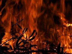 Из-за лесного пожара свои дома покинули 700 жителей Калифорнии