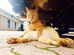 Уличного кота приняли в ряды полиции Австралии