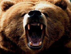Медведь напал на геолога в Якутии: тело не найдено