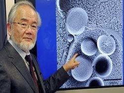 Нобелевская премия 2016 года: лауреат доказал, что поститься полезно