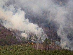 Более 840 гектаров леса уничтожил огонь за сутки на Дальнем Востоке