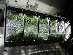Надувные оранжереи будут снабжать астронавтов свежими продуктами
