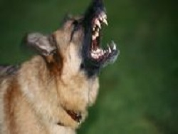 Житель Ростовской области натравил собаку на фельдшера скорой